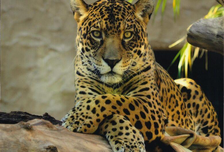 Parque Ecológico de São Carlos participa de programação online de férias