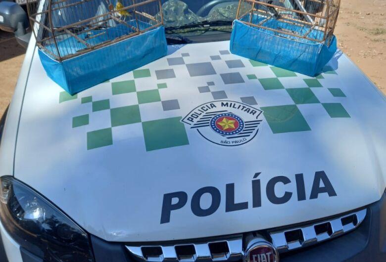 Polícia Ambiental localiza pássaros silvestres em cativeiro em São Carlos