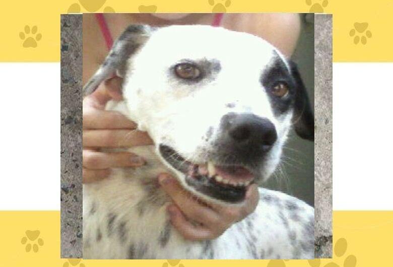 Homenagem da Funerais Pet a cachorrinha Tusca