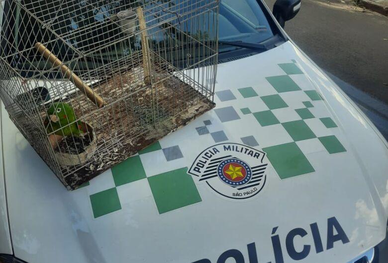 Maritaca em cativeiro é resgatada por policiais ambientais