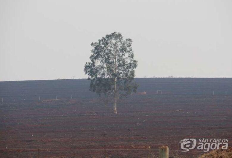 Estudo analisa impacto de incêndios nos diferentes ecossistemas brasileiros