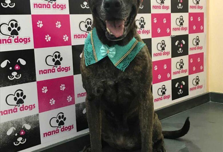 Homenagem da Funerais Pet à cachorrinha Fani