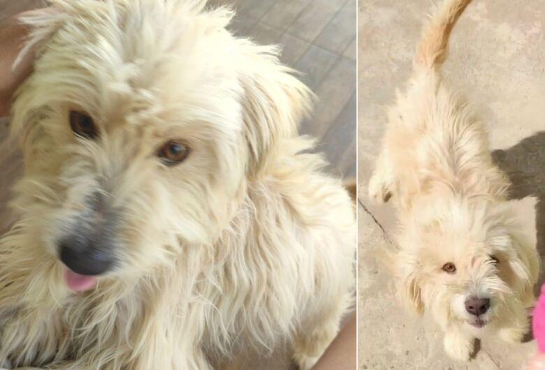 Cachorro Albino desaparece no Arcoville