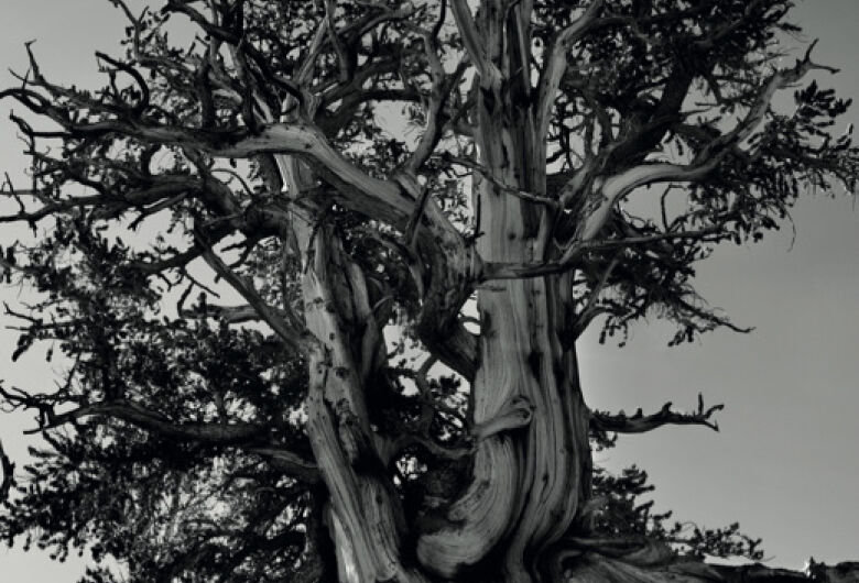 Com linguagem acessível, e-book discute a importância da árvore na restauração das cidades