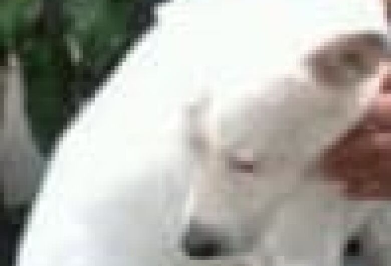 Homenagem da Funerais Pet ao cachorro Bolinha