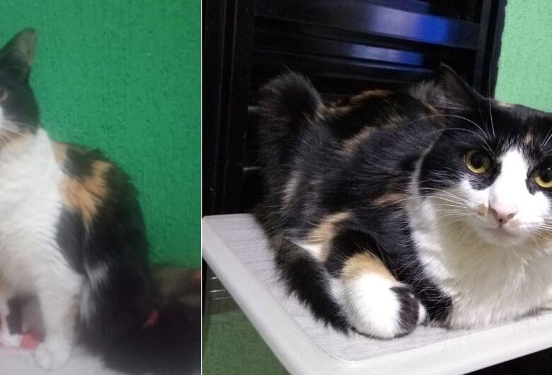 Gatinha Chiclete desaparece no Aracy 2