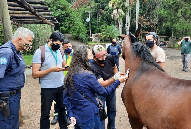 Departamento de Defesa Animal realiza treinamento para resgate de animais