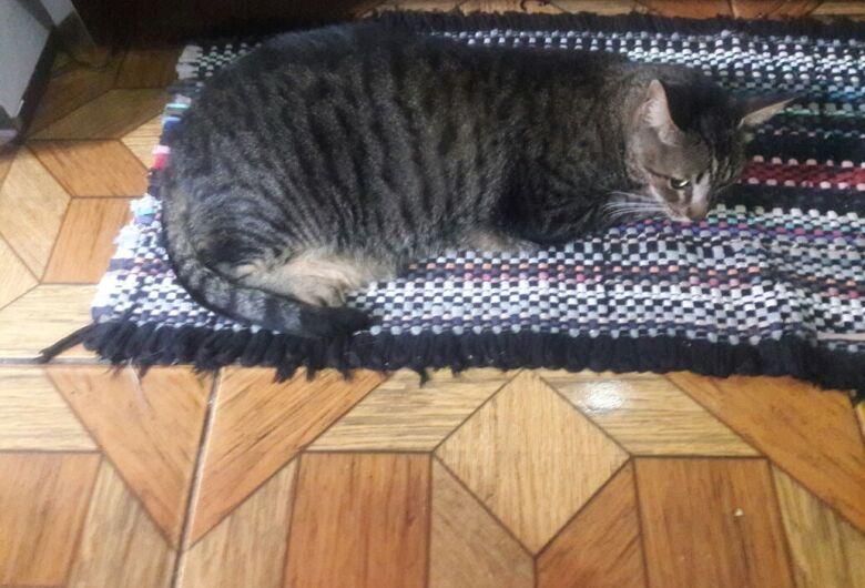 Gatos podem estar sendo envenenados no São Carlos 8