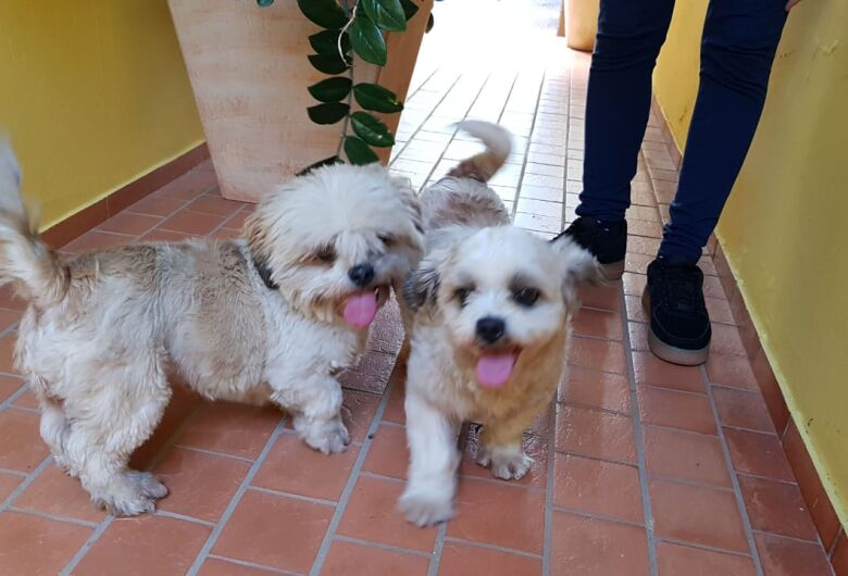 Três cãezinhos são resgatados na Vila Monteiro e procuram seu dono