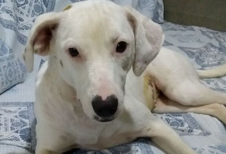 Cachorrinha perdida é resgatada no Condomínio Moradas 2