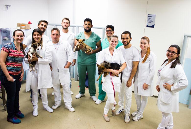 Hospital Veterinário Universitário da UNICEP E ONG ASA castraram 23 animais de rua