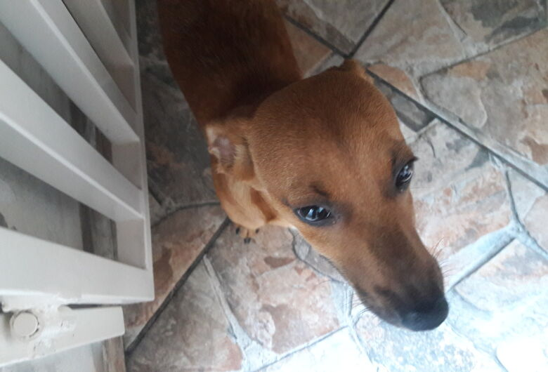 Cachorro é encontrado no Jardim Riceti