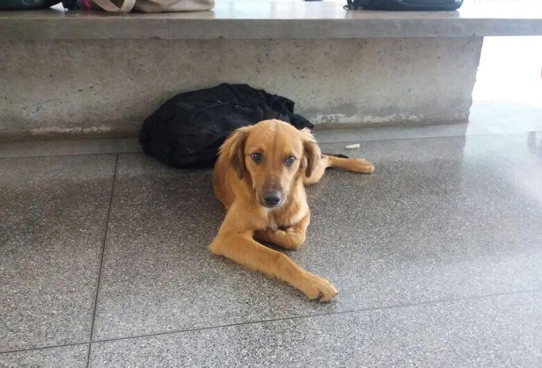 Cães perdidos estão na USP e esperam seus donos