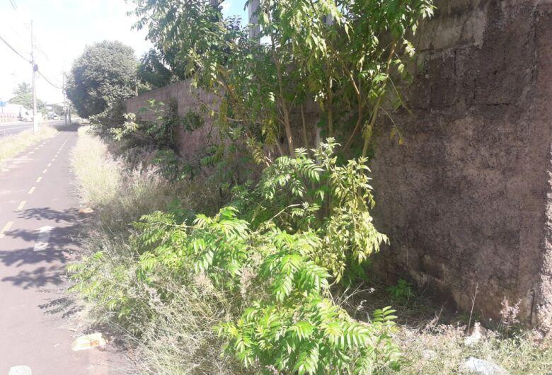 Sérgio Rocha quer limpeza e corte de mato no entorno da Escola Péricles Soares
