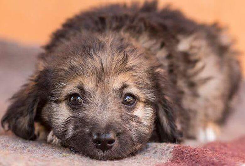 Filhotes e cães adultos poderão ser adotados neste domingo