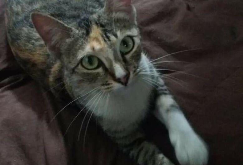 Proprietários procuram informações da gatinha Menina