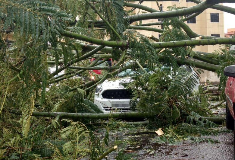 Árvore cai sobre carro em movimento e motorista fica preso no veículo