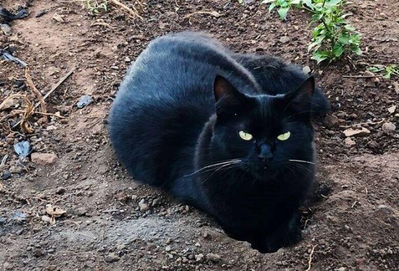 Gatinha desaparece na região do Astolpho Luís do Prado