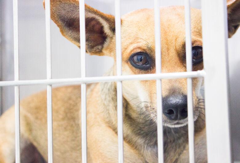 ONG ASA, Amigos Salvando Amigos, realizará castração gratuita de animais no HVU da UNICEP