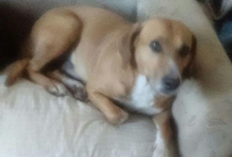 Desesperada, desempregada pede ajuda para poder ter ração para alimentar cães abandonados