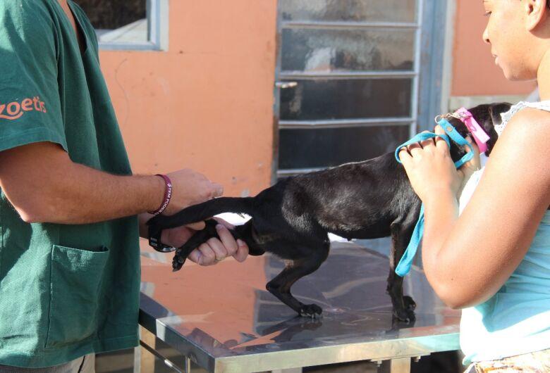 Mutirão realiza a castração gratuita de 100 animais em São Carlos e Ibaté