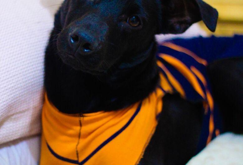 Feira de adoção de cães acontece neste sábado