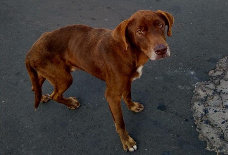 Franjinha precisa de ajuda; cachorrinho tem tumor em uma das patinhas