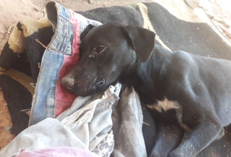 Cachorrinho João é abandonado em um saco de lixo no Aracy