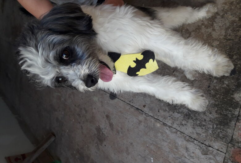 Cachorro é encontrado na Vila Nery