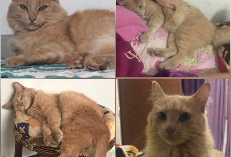 Gato Fred está desaparecido