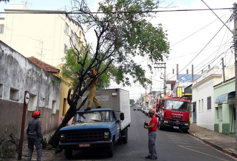 Caminhão fica 'enroscado' em galho de árvore no centro
