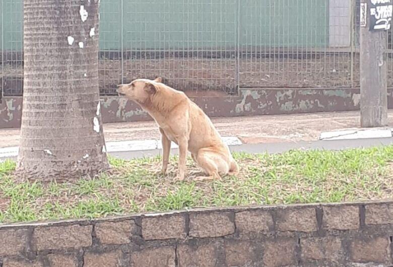 Cão está perdido na região do Centro de Especialidades