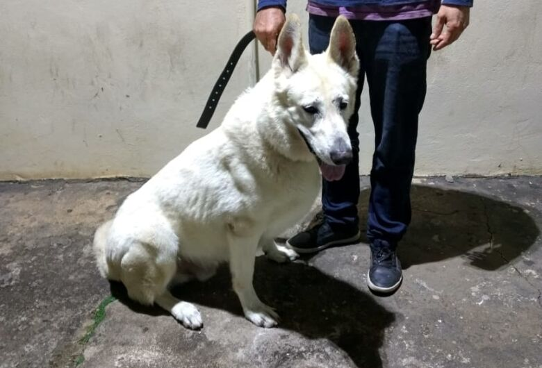 PM recupera cachorro que foi furtado na Vila Elisabeth