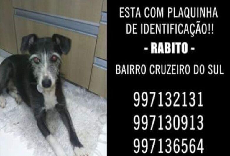 Utilidade-pública: cachorro Rabito está desaparecido