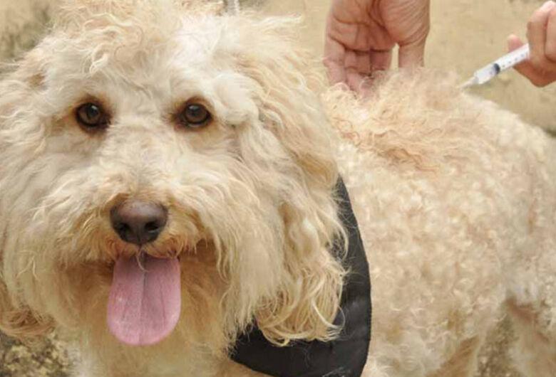 Sábado é dia de levar cães e gatos para vacinar contra a raiva animal
