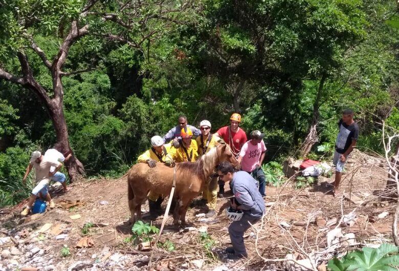 Bombeiros resgatam cavalo que caiu em buraco