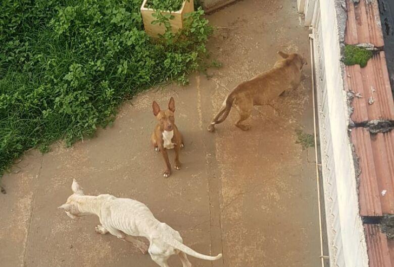 Cinco cães são abandonados em uma casa no Douradinho; protetoras lutam para resgatá-los