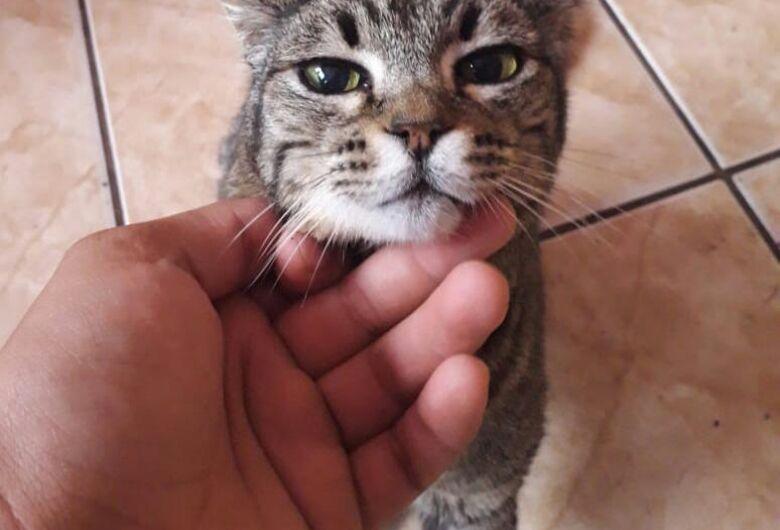 Clube dos Patinhas Carentes faz campanha para ajudar gatinho e cachorrinhos com problemas de saúde