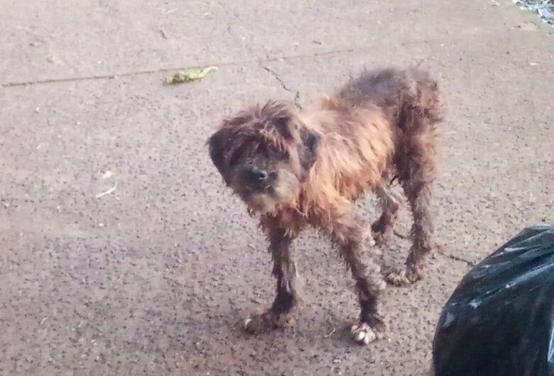 Cãozinho assustado está perdido no Jardim Bicão