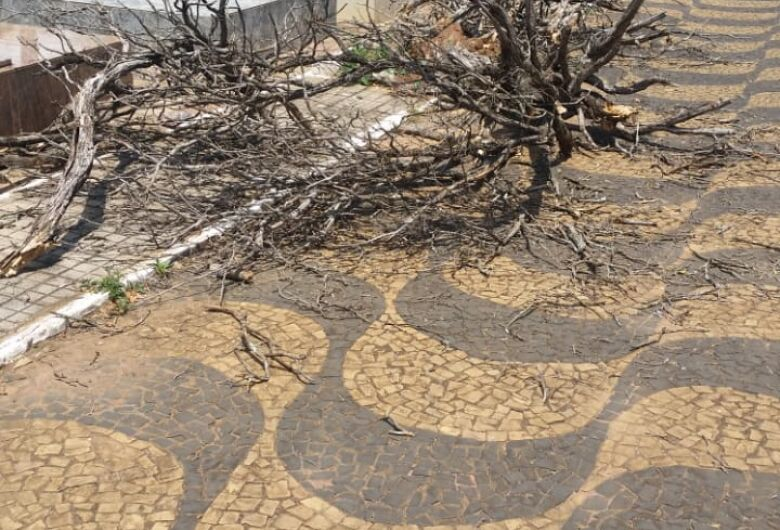 Abandono do Cemitério Santo Antonio de Pádua revolta moradores
