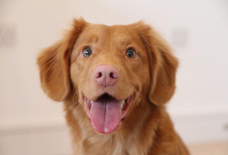 Pacientes da Unimed São Carlos poderão receber visita de animais de estimação