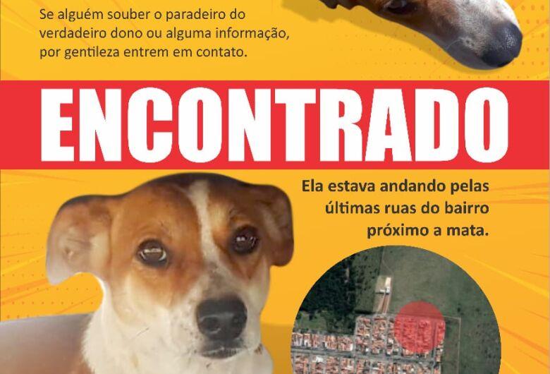 Cachorro é encontrado no Douradinho