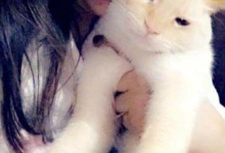 Gato Tico está desaparecido