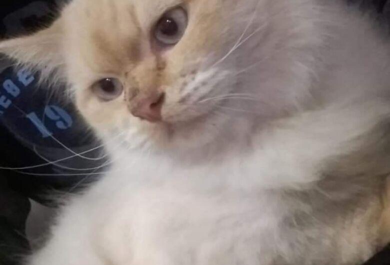 Gato está desaparecido