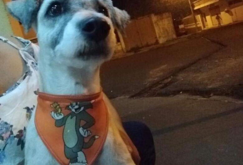 Cachorrinho é resgatado na Vila Nery