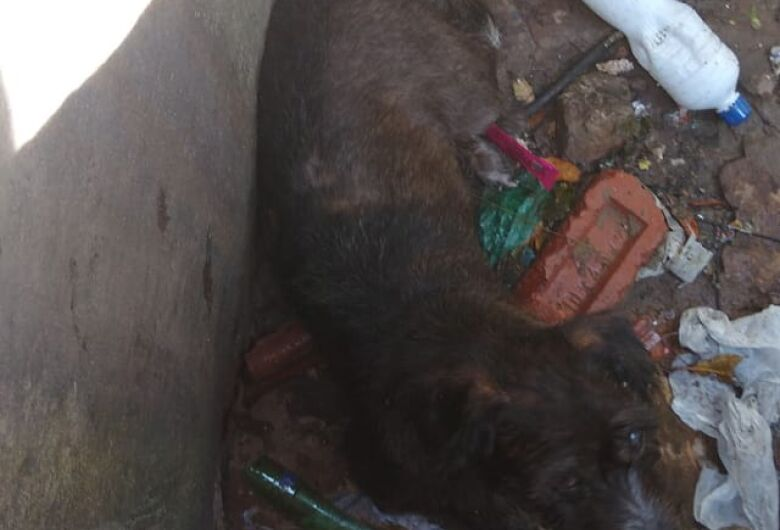 Cãozinho cego cai em bueiro aberto no Jardim Zavaglia