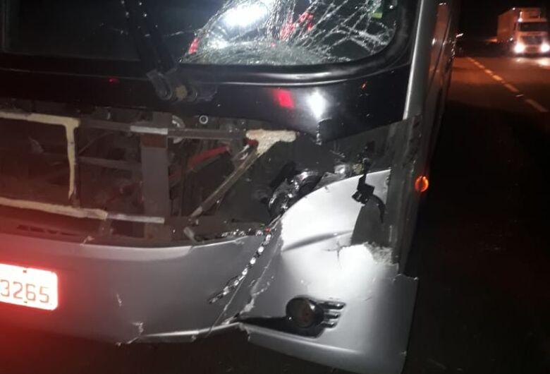 Ônibus da Cometa atropela e mata cavalo na Washington Luís