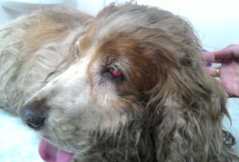 Cachorrinha resgatada é diagnosticada com tumor e precisa de ajuda