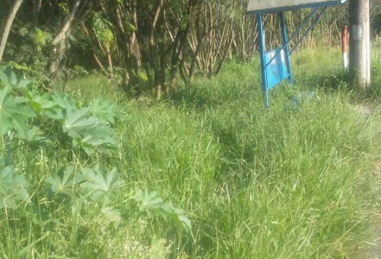 Mato alto toma conta terreno abandonado no Astolpho