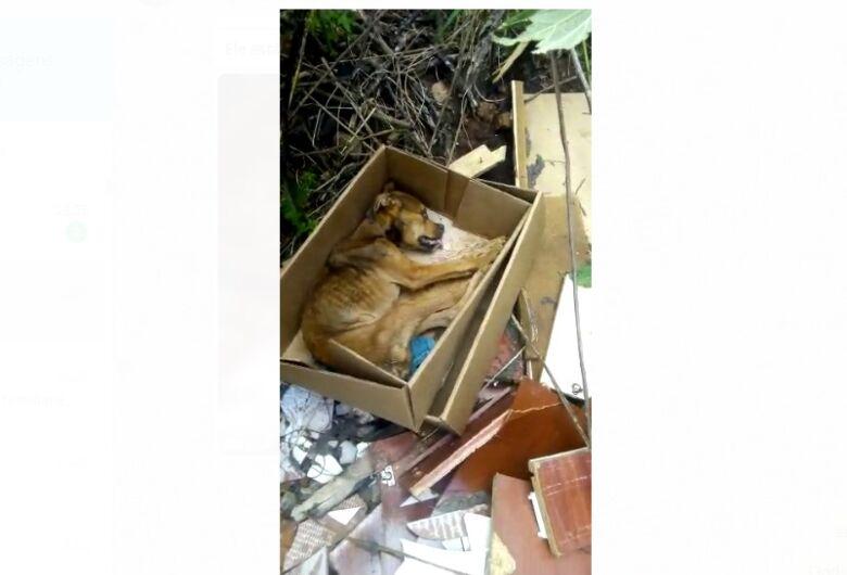 Cachorro é deixado agonizando em caixa de papelão no Antenor Garcia